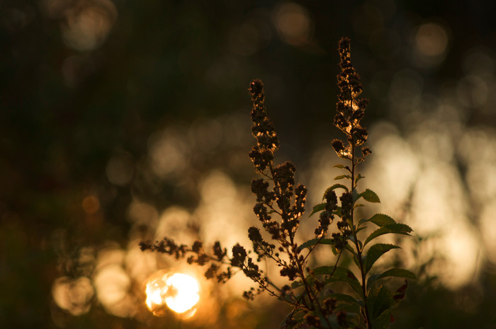Backlit Somethingbush